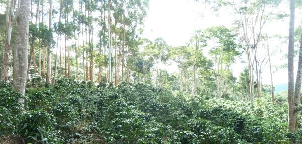 Villa Rica Kaffee_rszd-600px